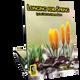 Longing for Spring (Digital: Single User)